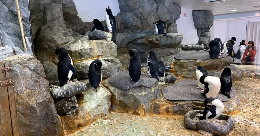 Kaiyukan Penguins 1
